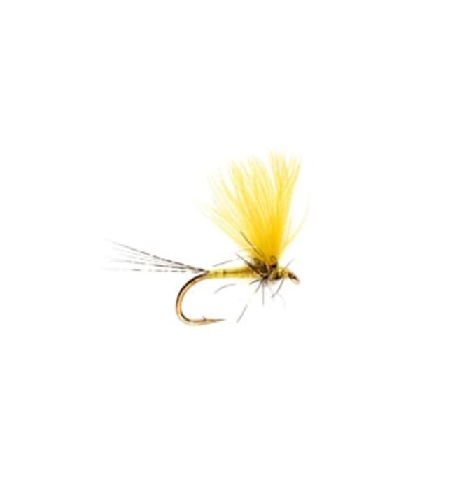 Fullin Mill  CDC Yellow May Dun pintaperho