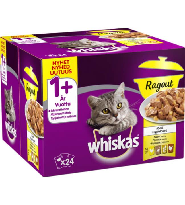 Whiskas 1+ 24 x 85 g Ragout Siipikarja hyytelössä