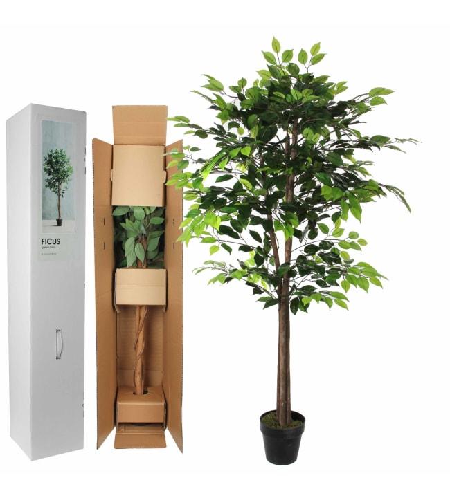 Silkkikukka Ficus