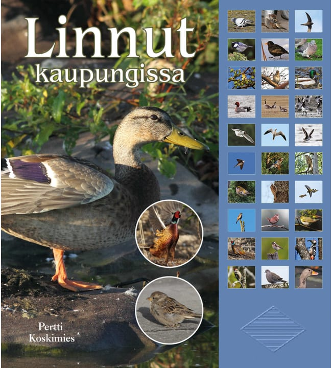 Pertti Koskimies: Linnut kaupungissa